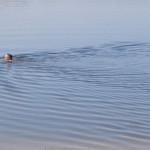 Bagry Pływanie