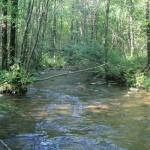 Czarna Hańcza na terenie Suwalskiego Parku Krajobrazowego