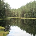 Jezioro śródleśne, tzw. suchary, w Wigierskim Parku Narodowym