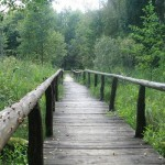 Kładka w Suwalskim Parku Krajobrazowym