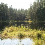Jezioro śródleśne w Wigierskim Parku Narodowym