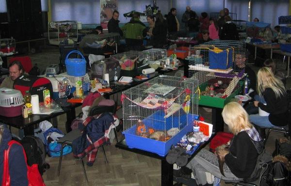 Wystawa fretek w Krakowie 2011