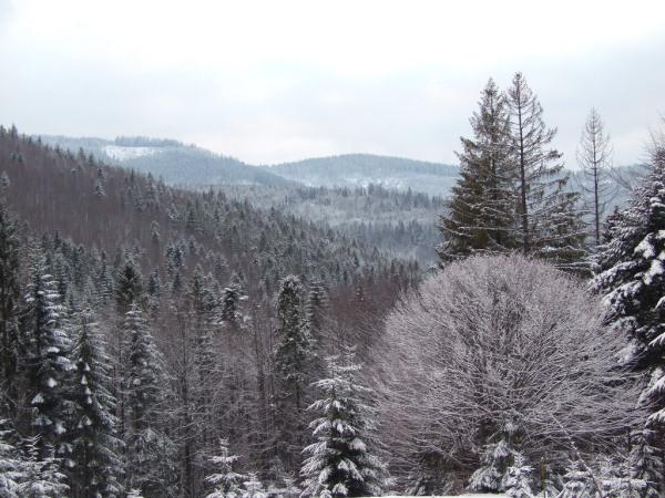 Zima w Żywcu
