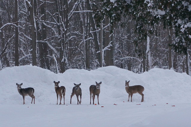 Pomysły na ferie zimowe 2015